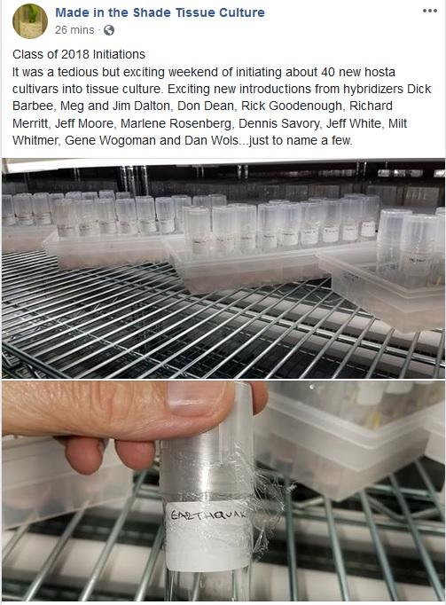 tissue cultures